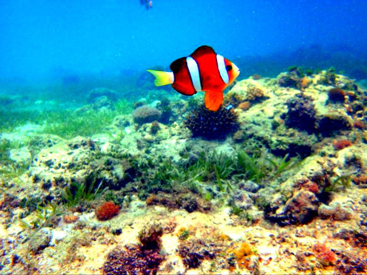 scuba diving in cebu