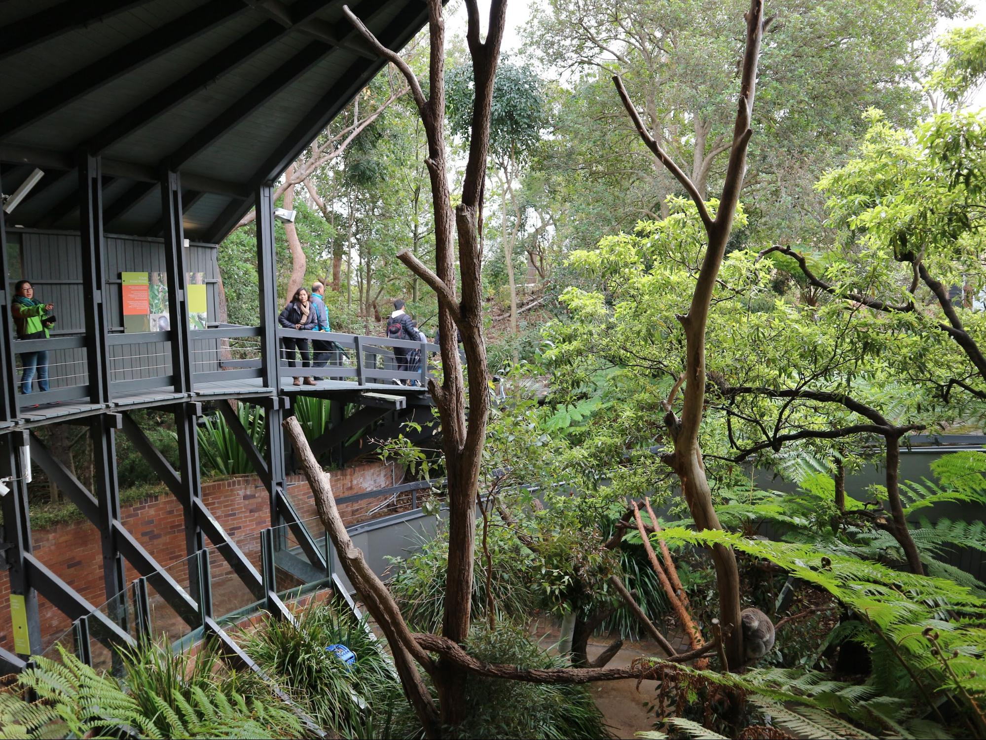 The koala sanctuary in Taronga Zoo